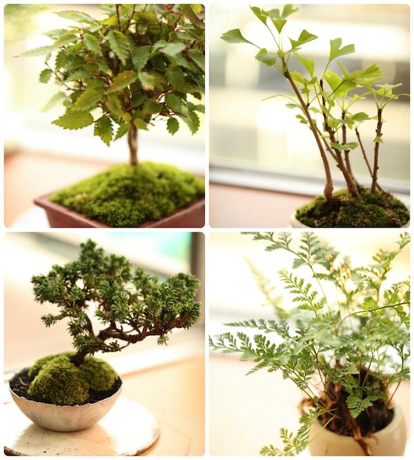 jun_bonsai_iizo.jpg